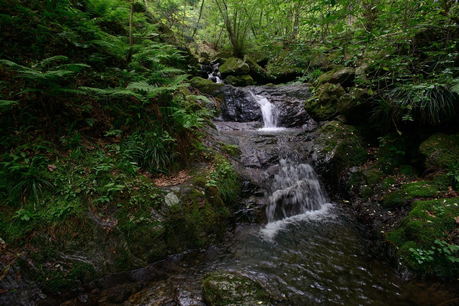 「白谷沢登山道の清流」の写真