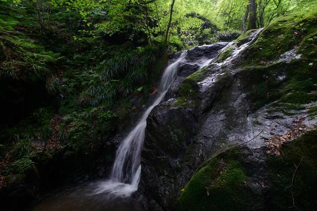 緑が美しい藤懸の滝の写真