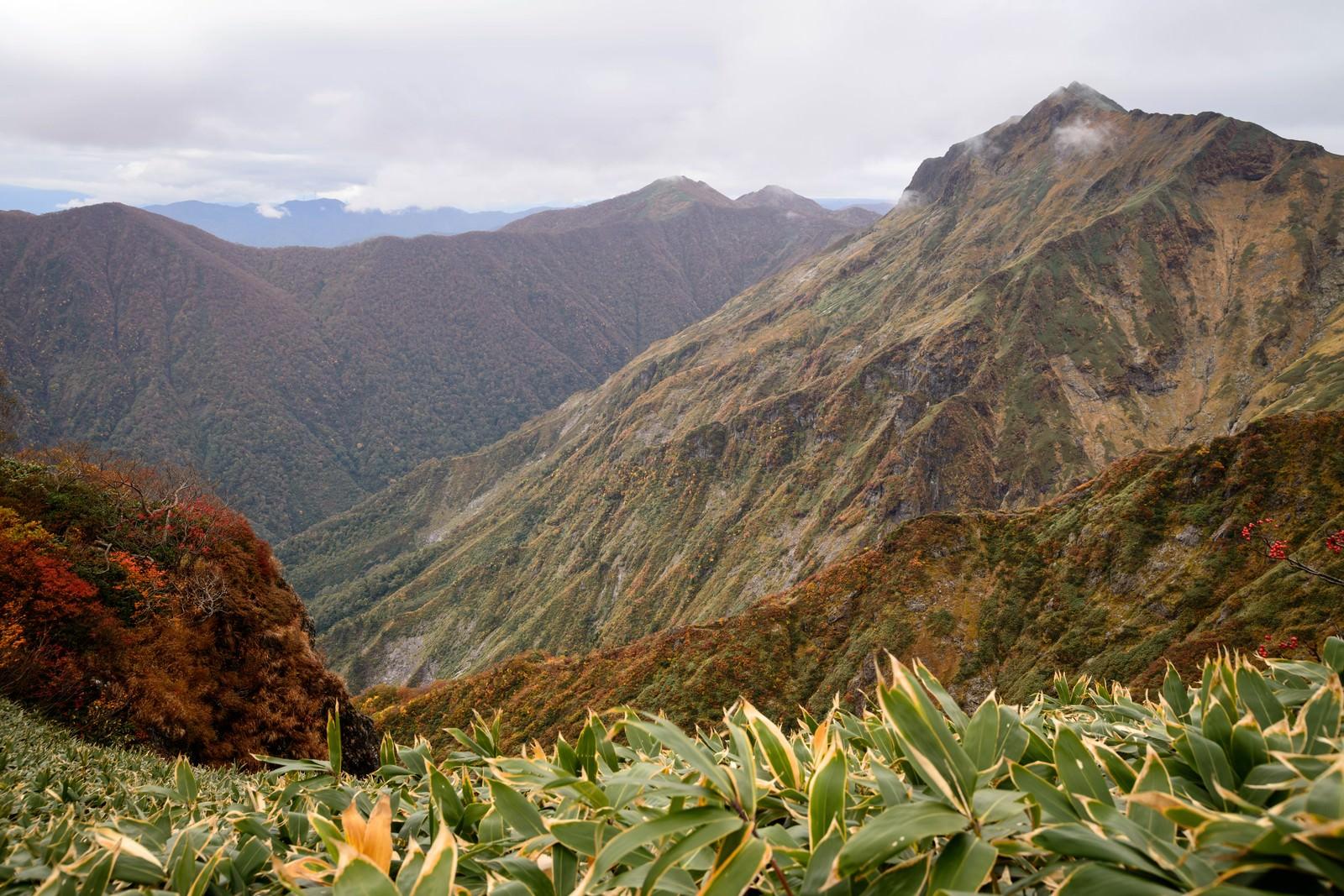 「黄葉する木々と霞む秋の谷川岳」の写真