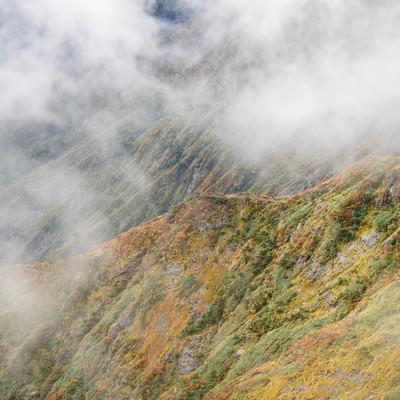 色づく山肌(森林限界地点)の写真