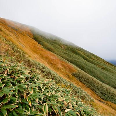 秋色の谷川岳斜面の写真