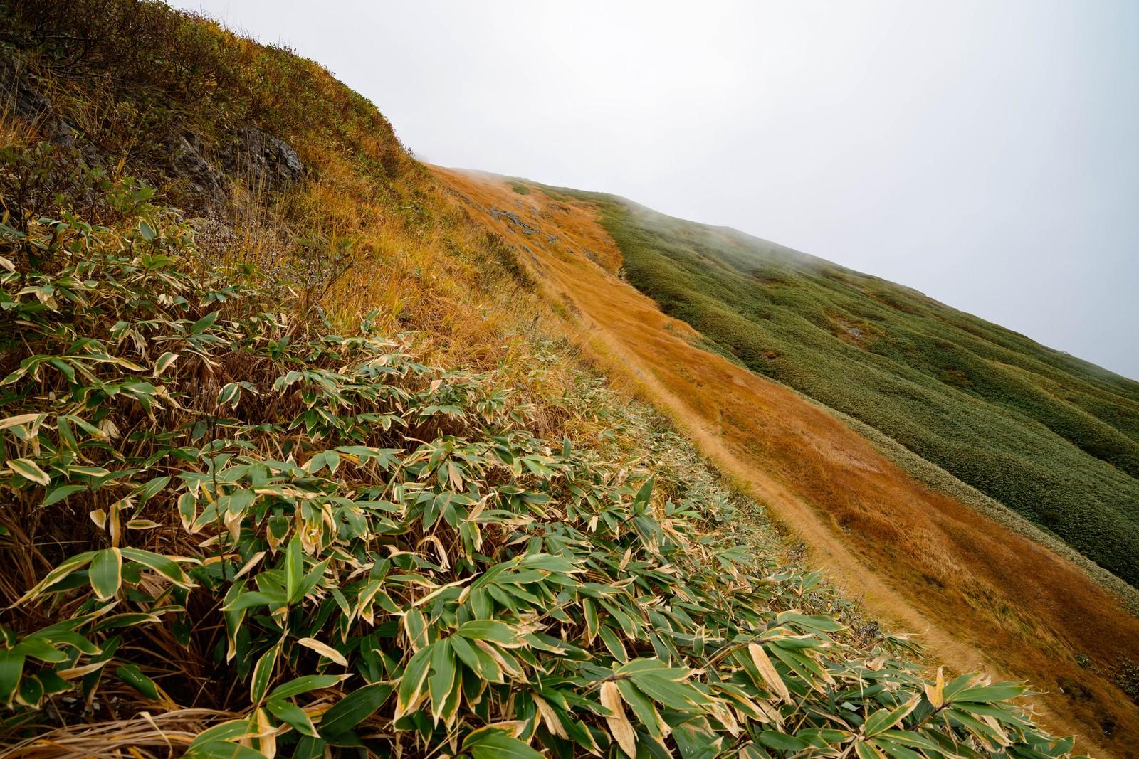 「秋の笹と黄葉する谷川岳の草木」の写真