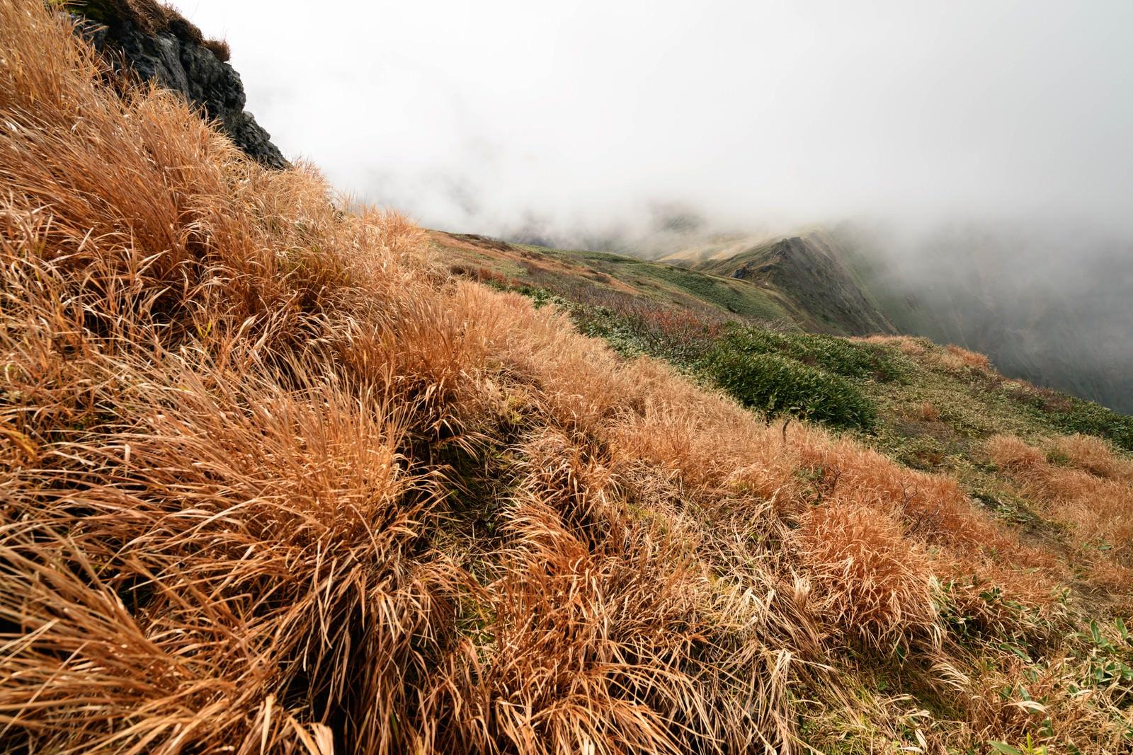 「色づく秋の谷川岳にある枯れ草」の写真