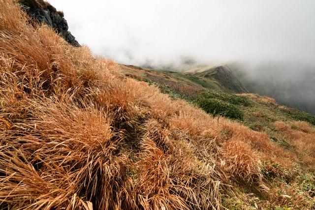 色づく秋の谷川岳にある枯れ草の写真