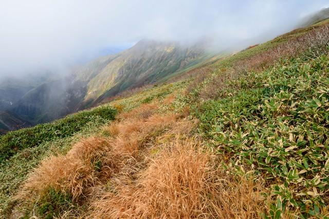 枯れ行く草木と笹が織り成す秋の谷川岳の写真