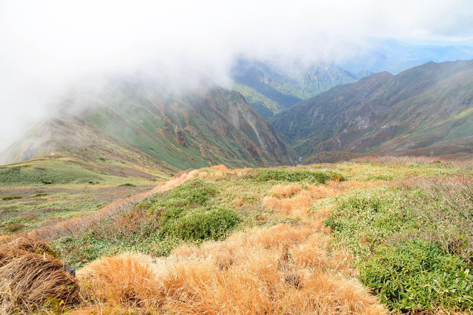 「沸き立つ霧と秋の谷川岳に見る枯れ草」の写真