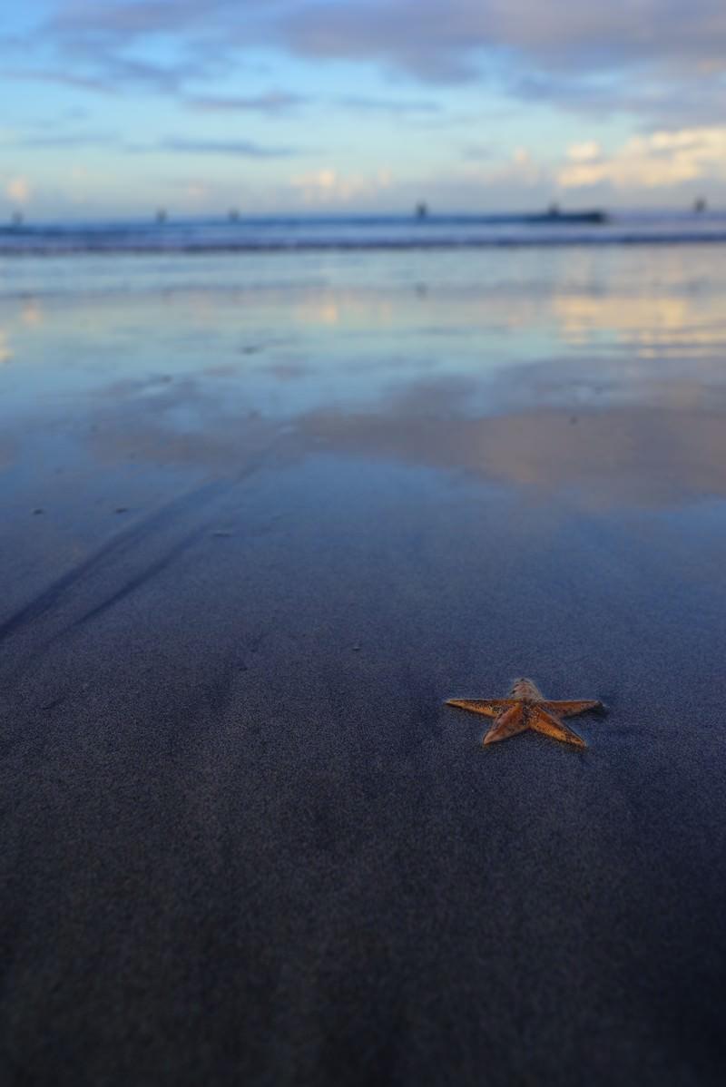 「砂浜に打ち上げられた赤いヒトデ」の写真
