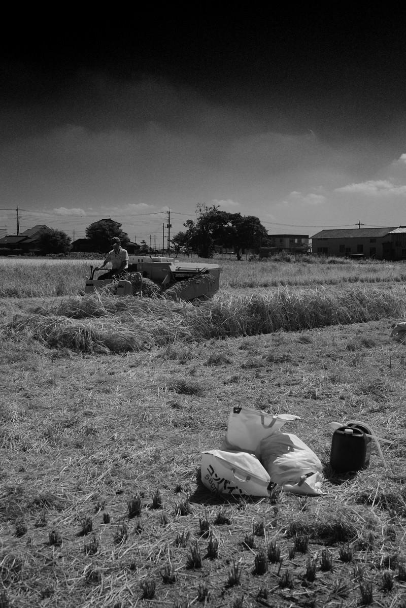 「稲刈り(モノトーン)」の写真