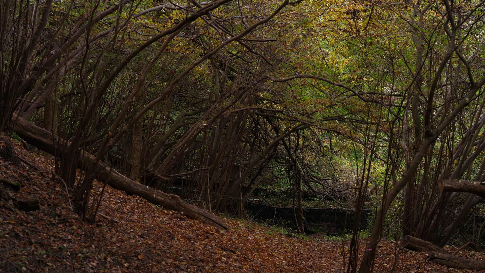 「木々に覆われた山道」の写真