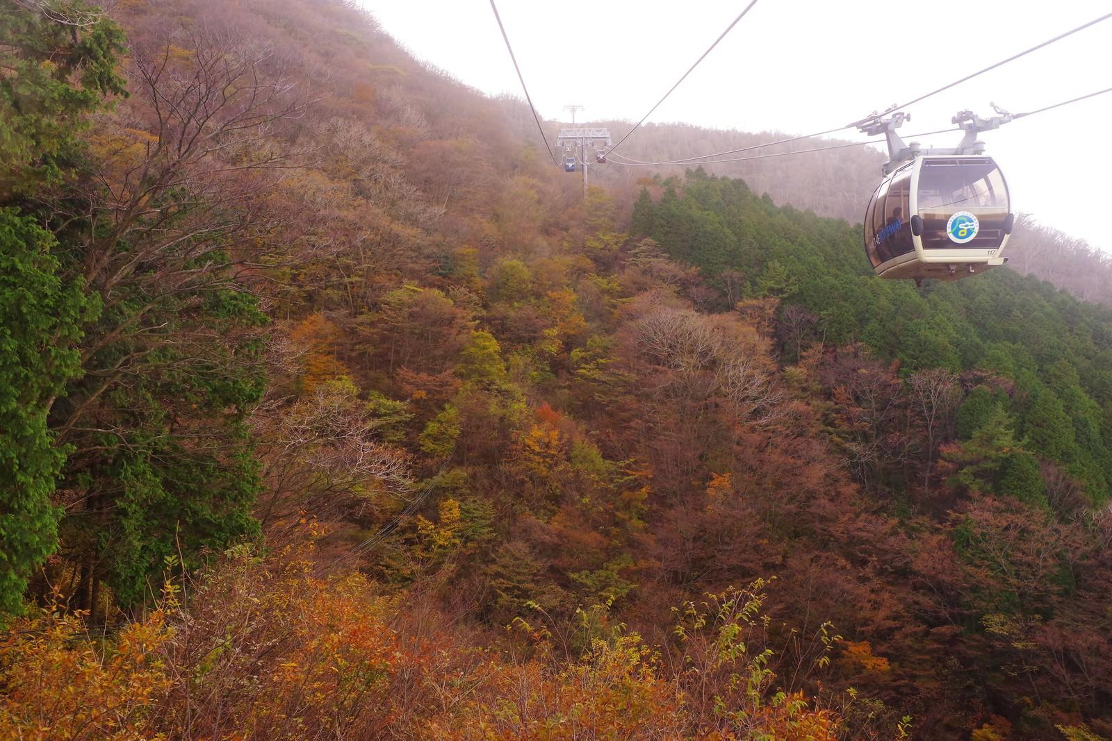 「紅葉した斜面とロープウェイ」の写真