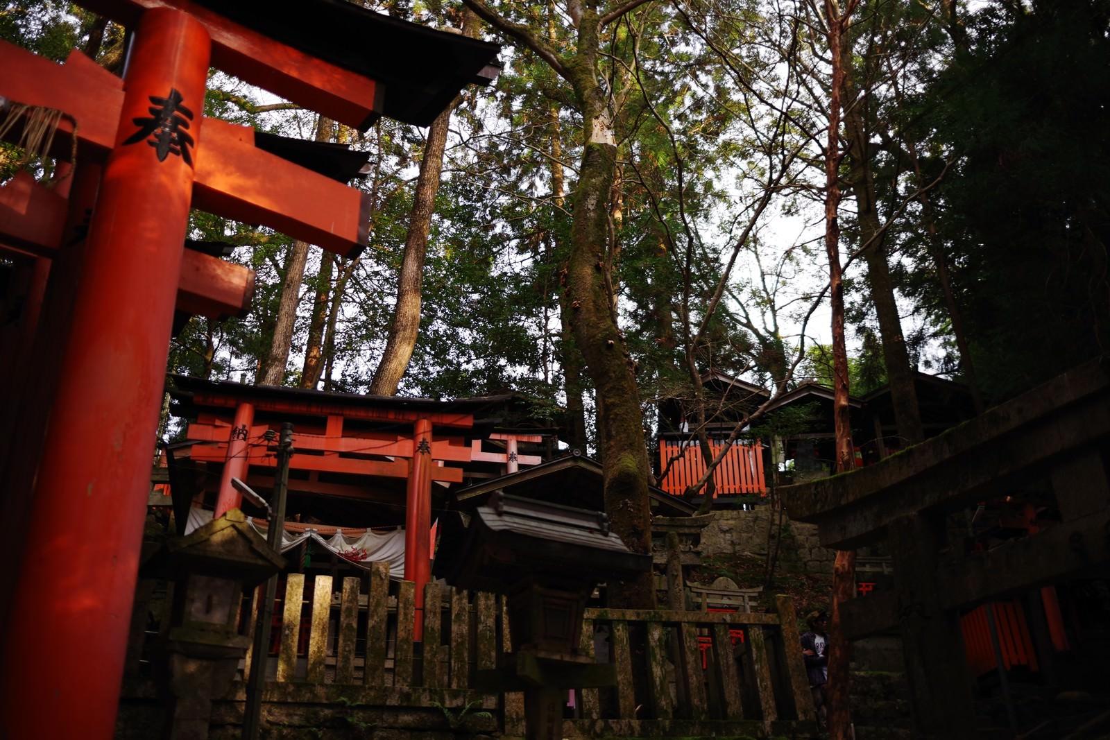 「山の側面にある鳥居のお塚群」の写真