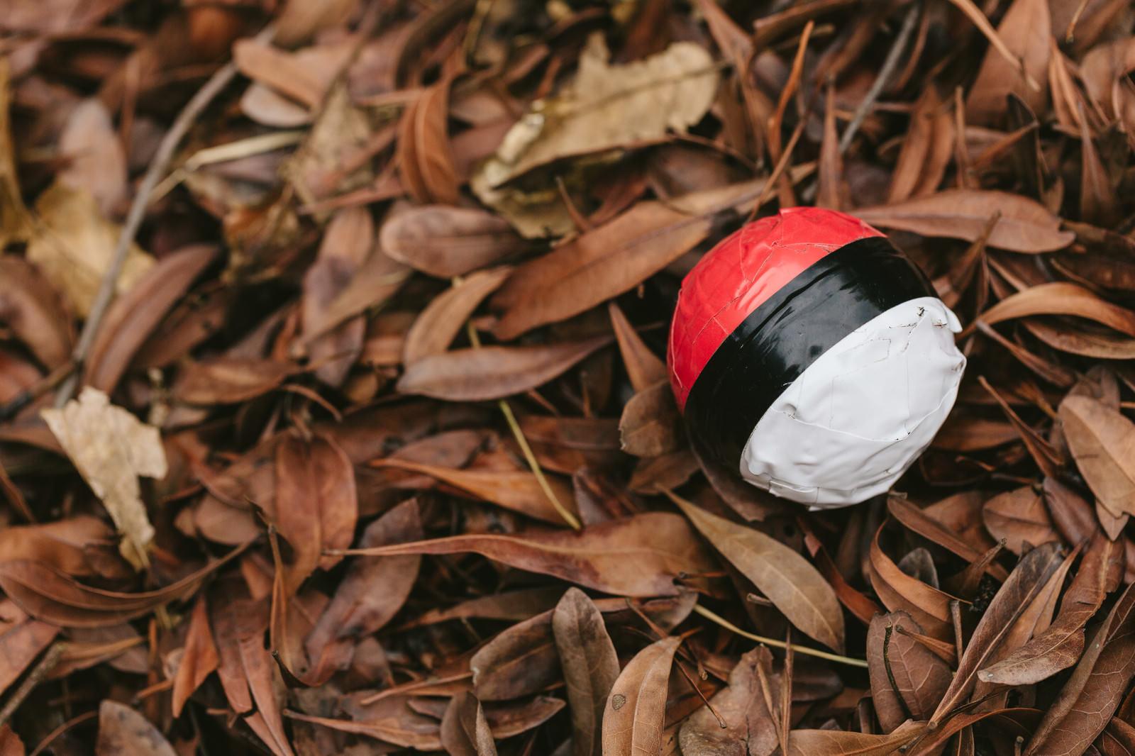 「落葉にまみれた紅白ボール」の写真