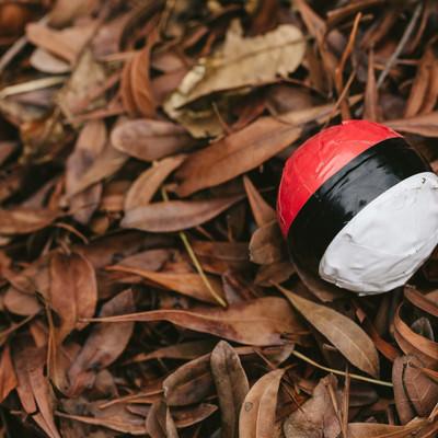 落葉にまみれた紅白ボールの写真