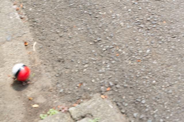 道端に転がる紅白ボールをゲットの写真