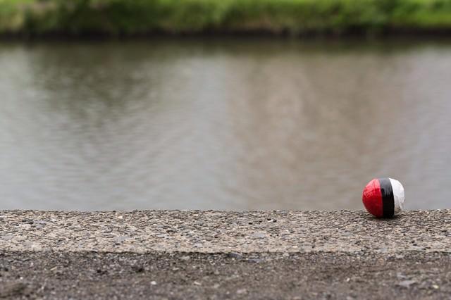 水辺に落ちていた紅白ボールをゲットの写真
