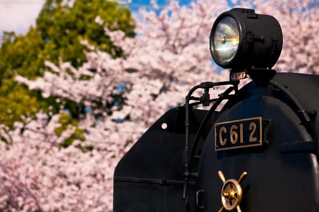 桜とSL(汽車)の写真