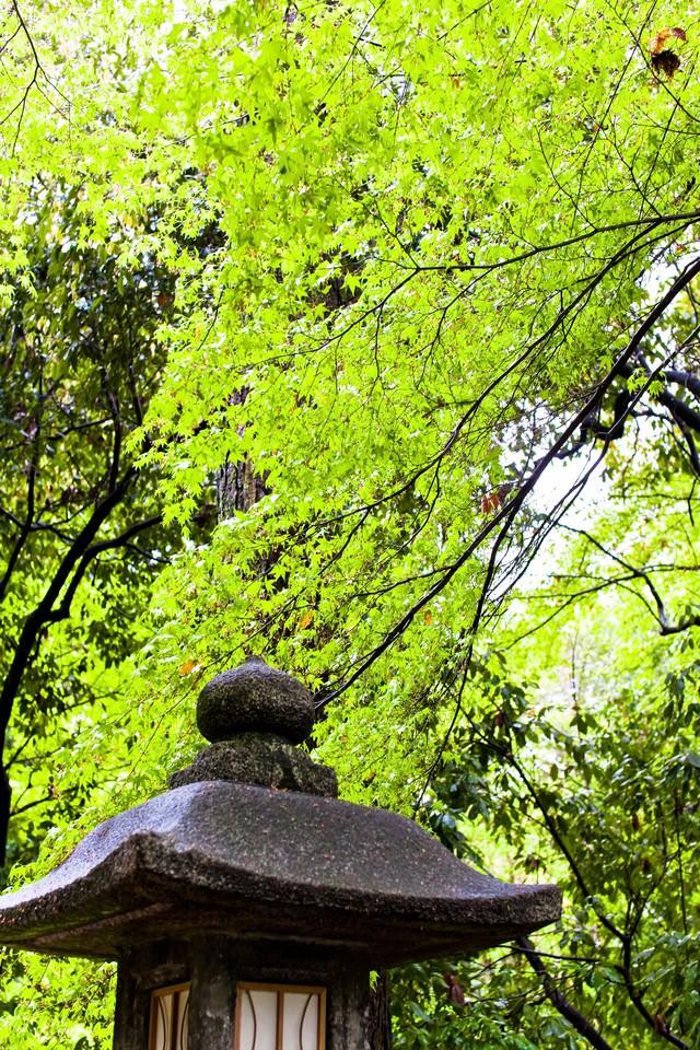 石の灯篭と緑林の写真