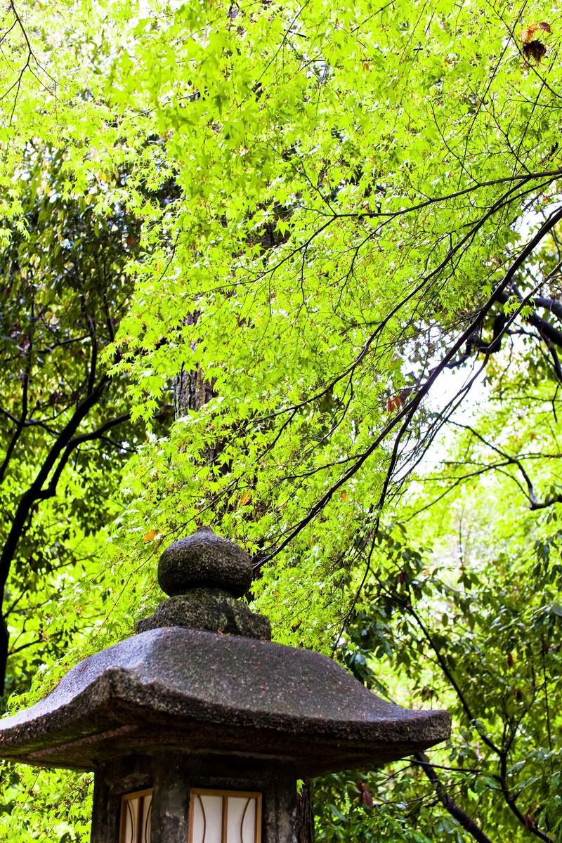 「石の灯篭と緑林」の写真