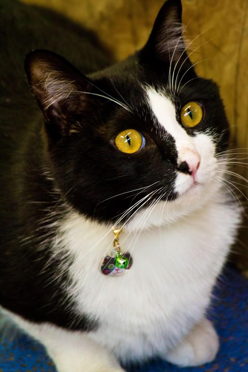 「上を見上げる猫」の写真