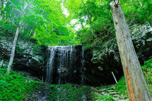 新緑に包まれる岩井滝の写真