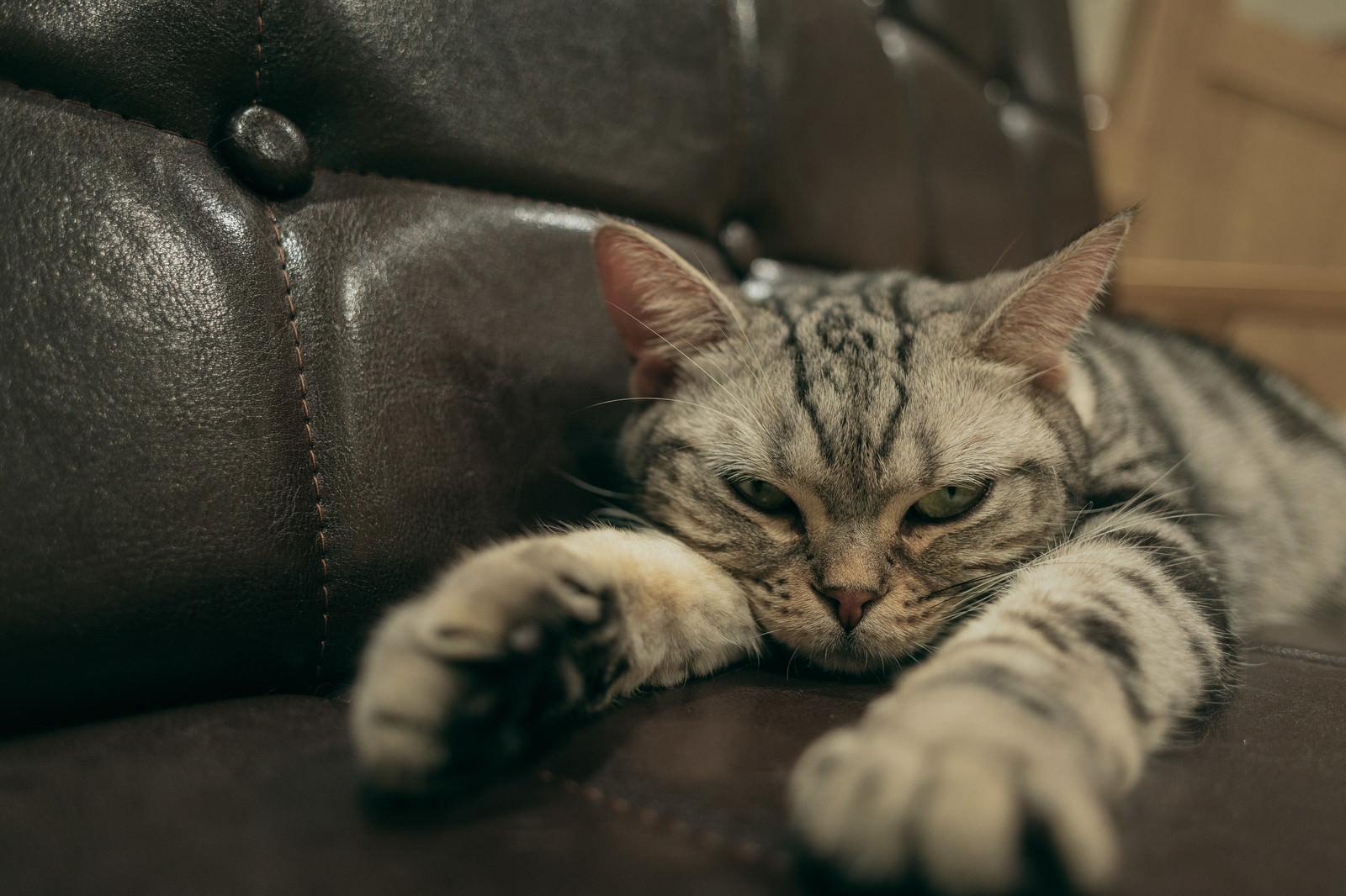 「ソファーで背伸びするニャンコ」の写真