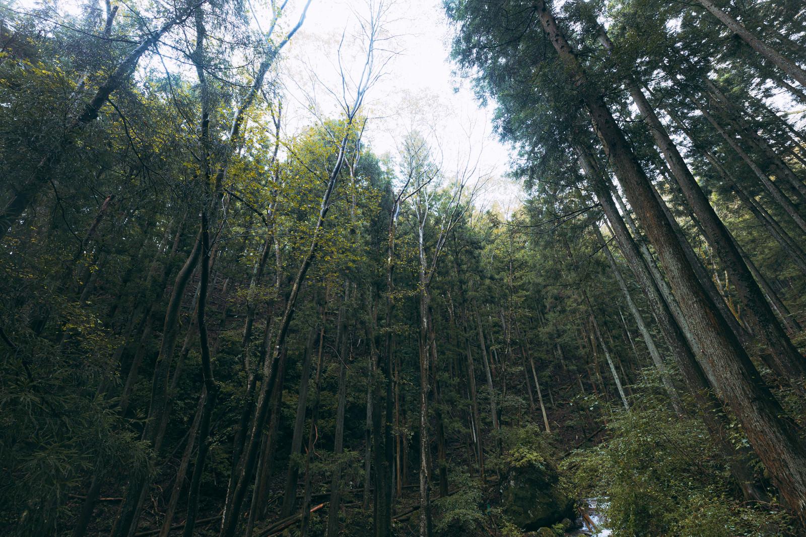 「渓谷の深い森」の写真