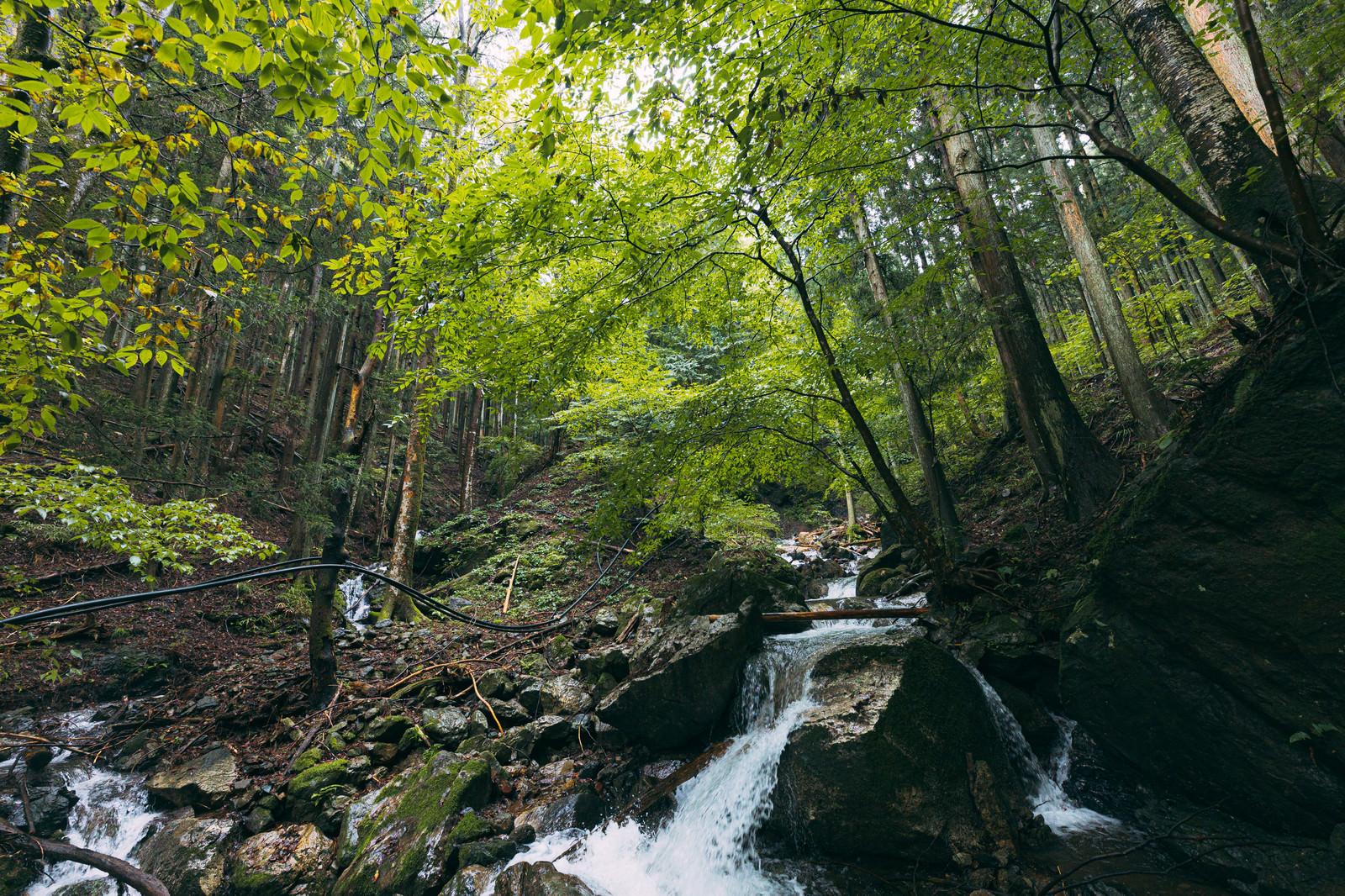 「緑に覆われた美しい渓流」の写真