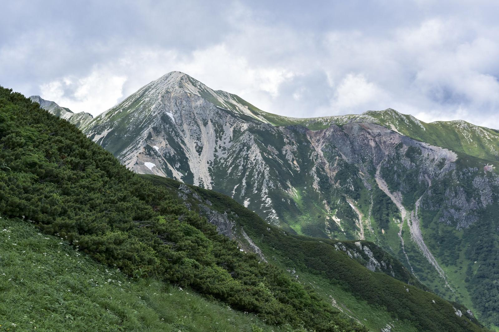「登山道の向こうに顔を出す鷲羽岳の白い斜面」の写真