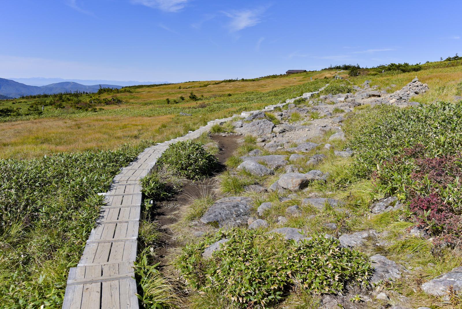 「苗場山山頂へと続く木道」の写真