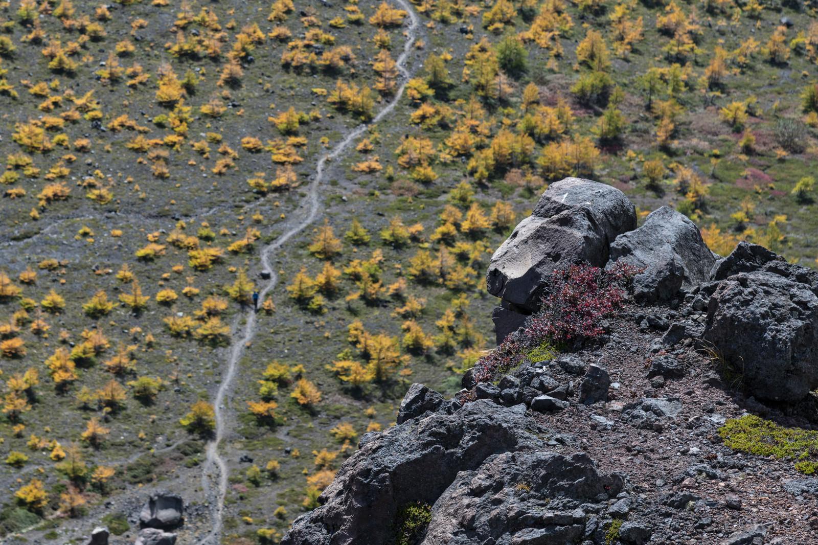 「唐松紅葉に彩られた賽の河原(浅間山)」の写真