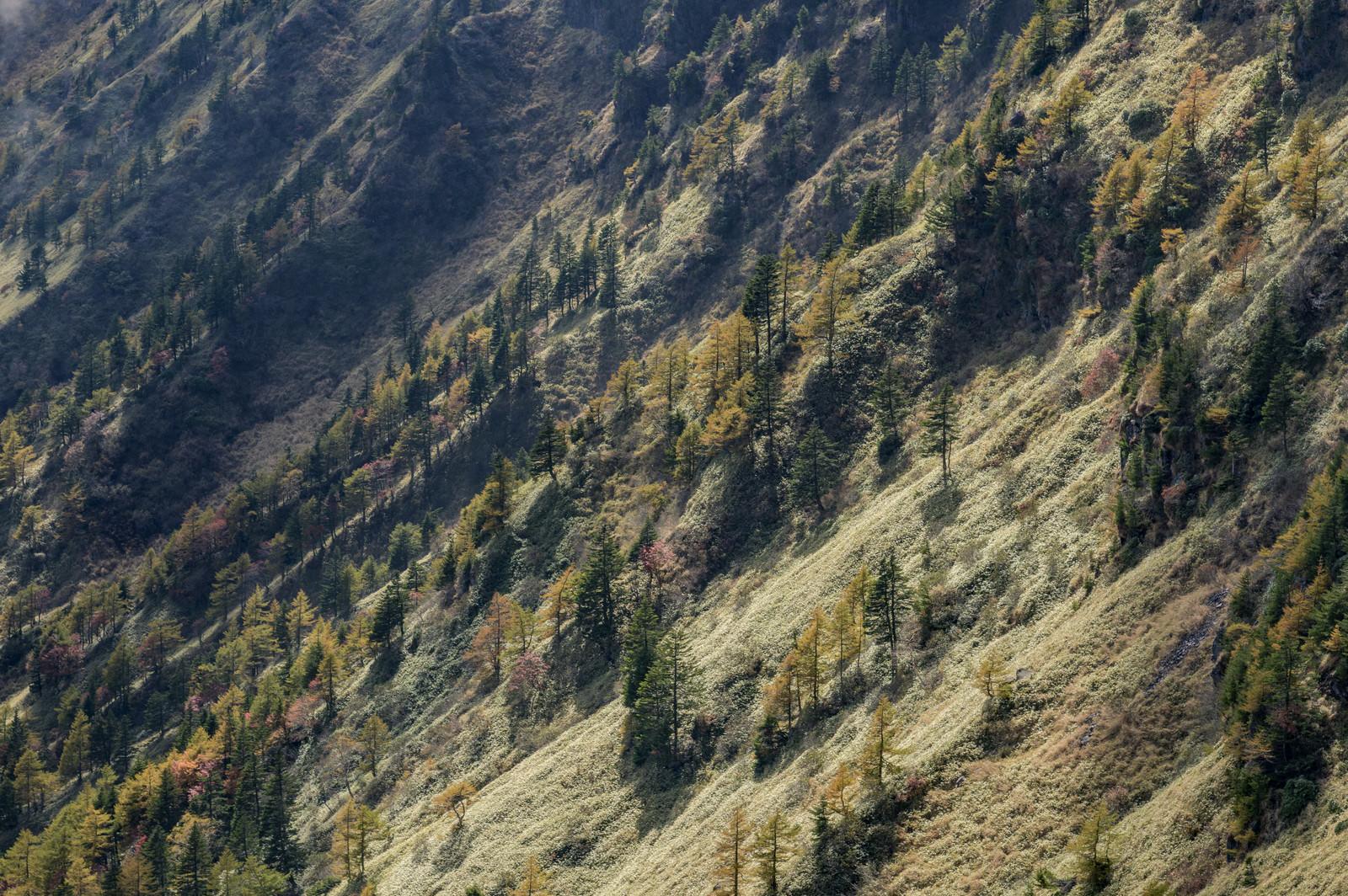「黒斑山草滑り方面の景色(浅間山)」の写真