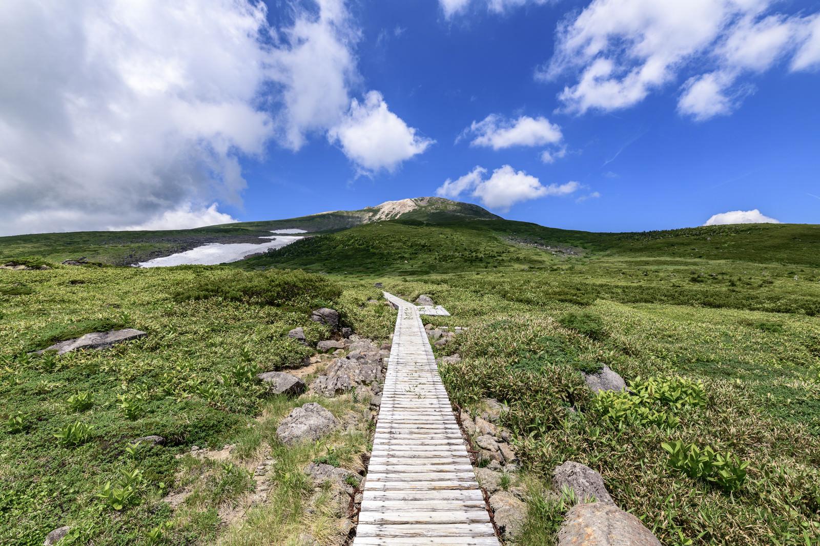 「木道が一直線に続く弥陀ヶ原と白山山頂方面」の写真