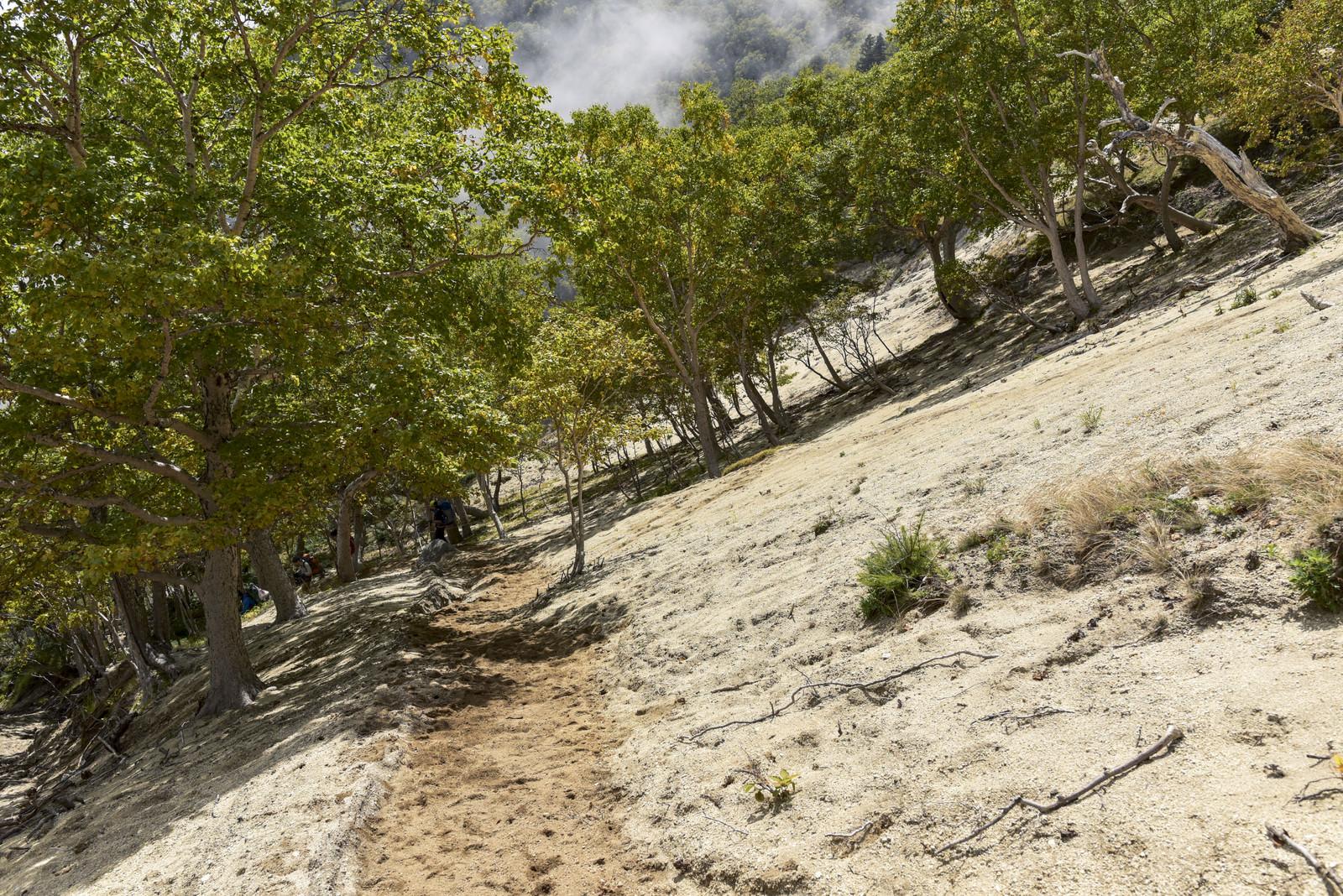 「白い砂地が広がる稜線の景色(鳳凰三山)」の写真