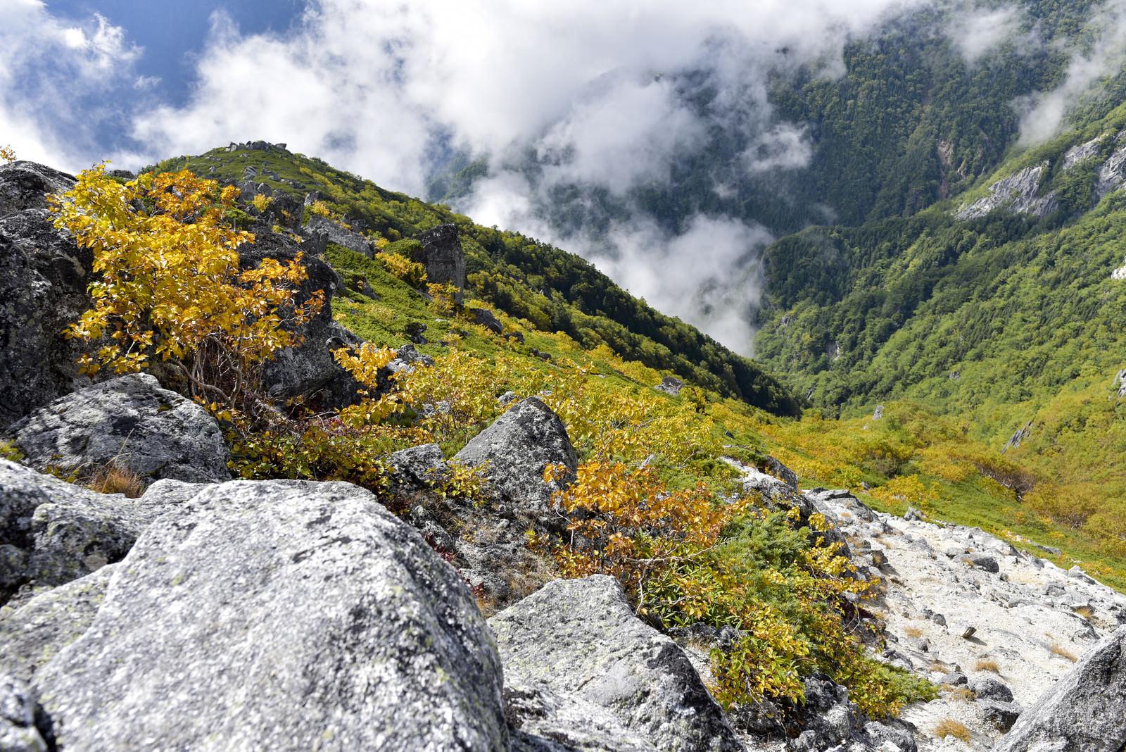 「紅葉の鳳凰山の山肌(鳳凰三山)」の写真