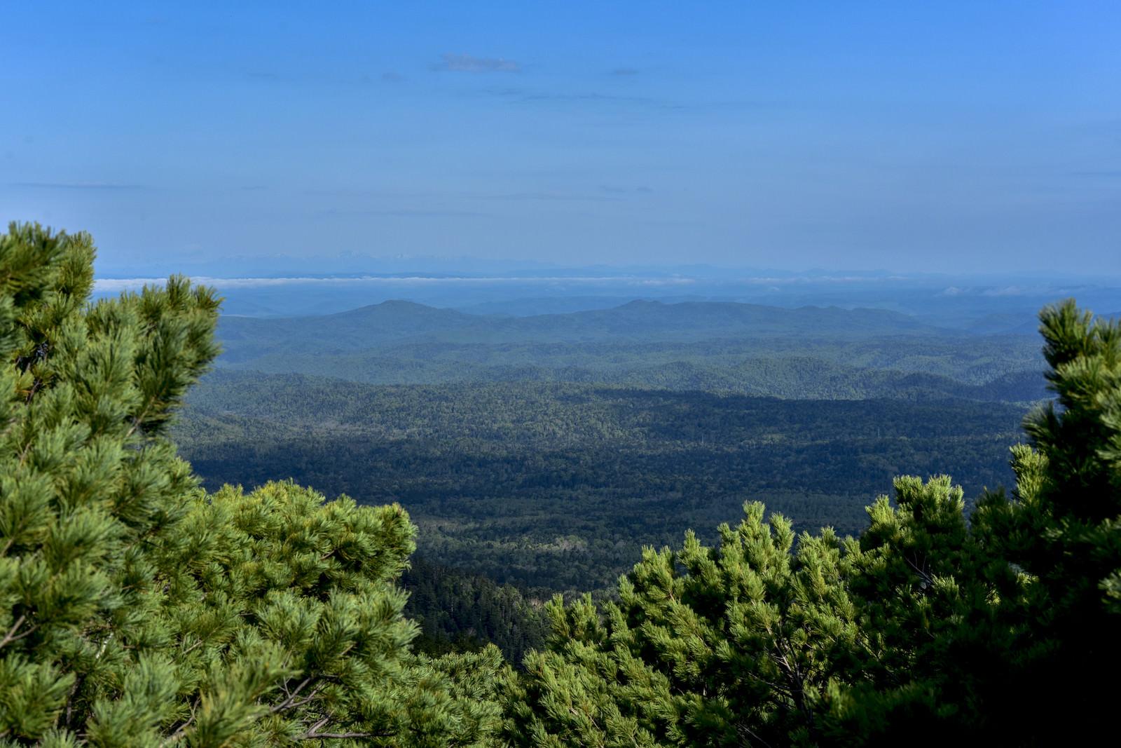 「ハイマツ林から見る道東日高方面の景色(雌阿寒岳)」の写真