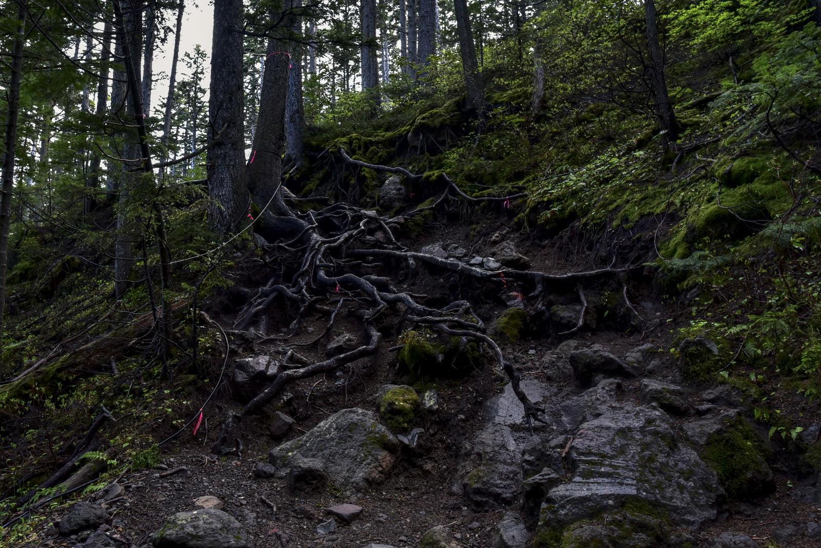 「湿った登山道が続く雌阿寒岳(めあかんだけ)」の写真