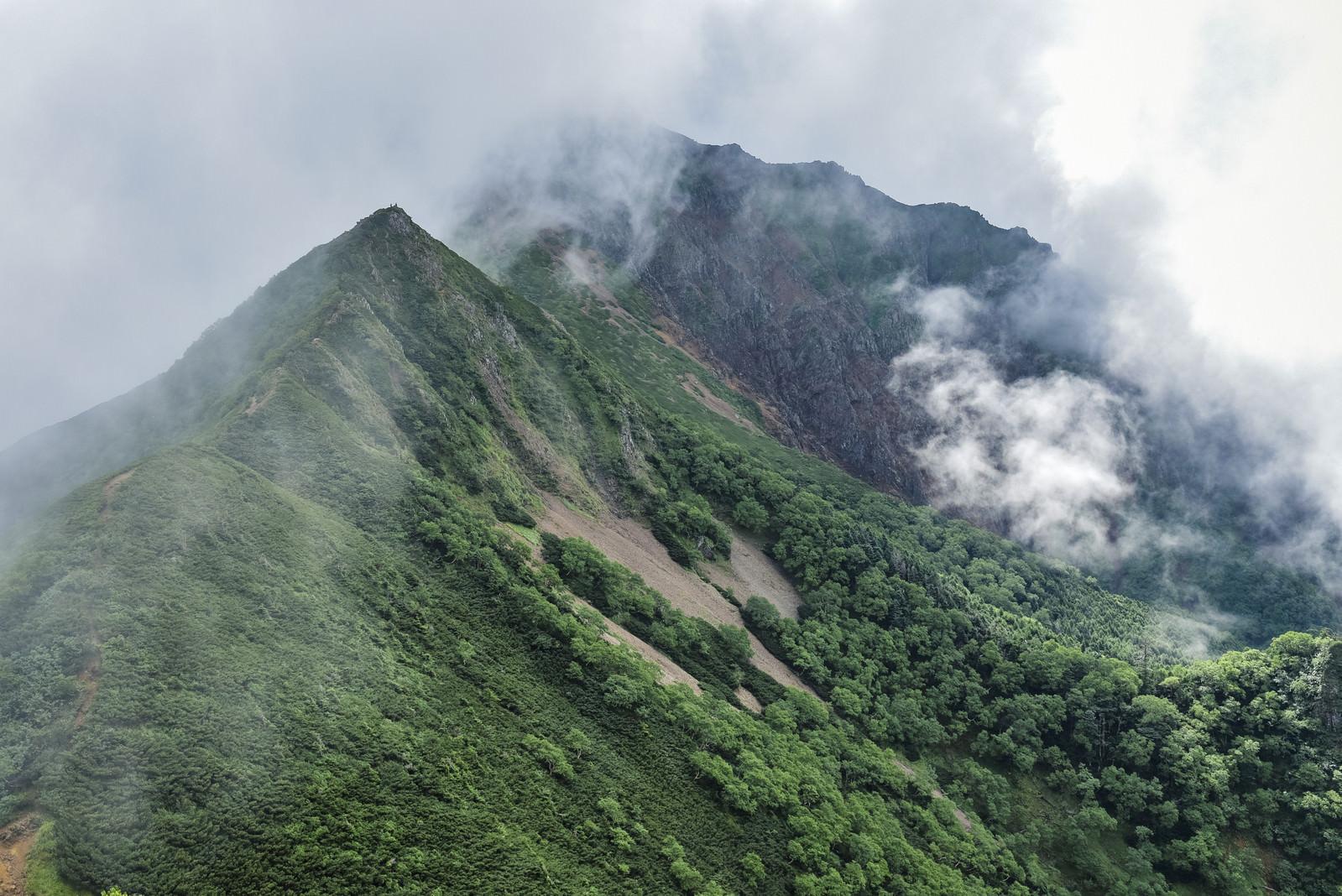 「湧き上がる雲に包まれる深い緑に包まれた八ヶ岳登山道(赤岳)」の写真