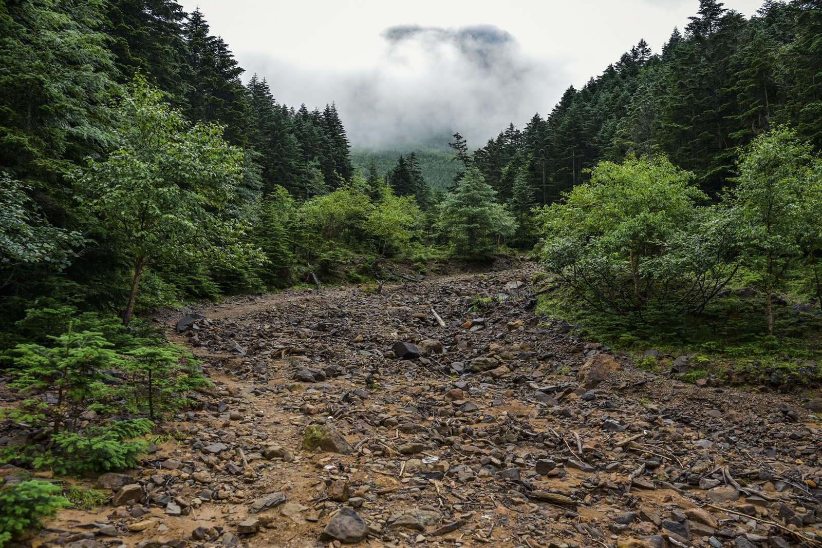 「雲の中の八ヶ岳へと進む登山道(赤岳)」の写真