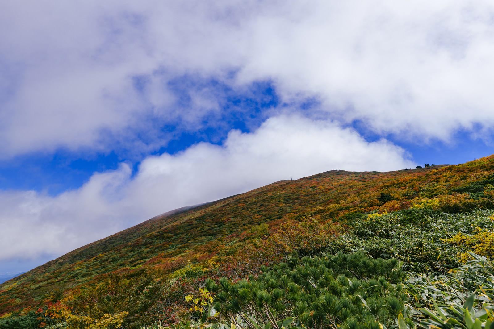 「斜面が錦に染まる紅葉が気持ちいい山の景色(栗駒山)」の写真