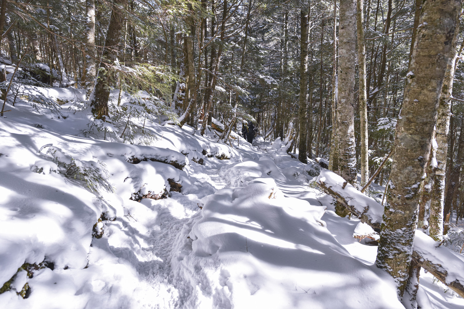 「雪のシラビソ林を進む登山者(金峰山)」の写真