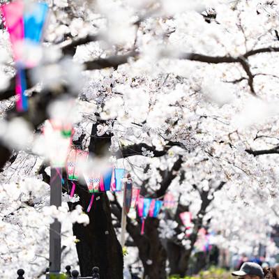 花見の季節がやってきたの写真