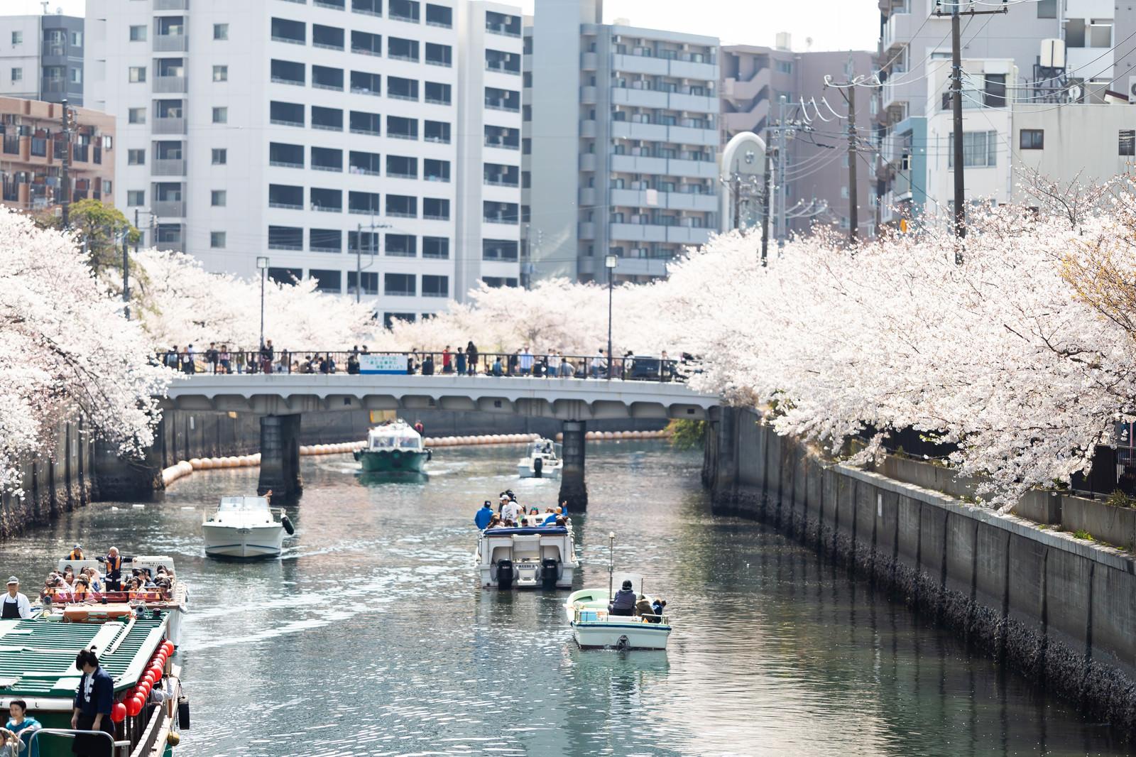「お花見クルーズする屋形船(大岡川桜まつり)」の写真