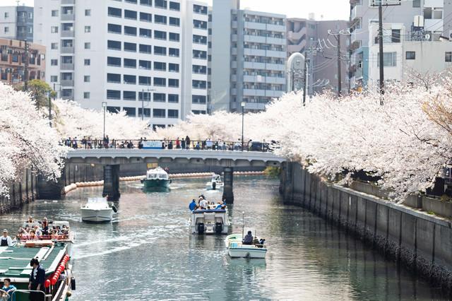 お花見クルーズする屋形船(大岡川桜まつり)の写真