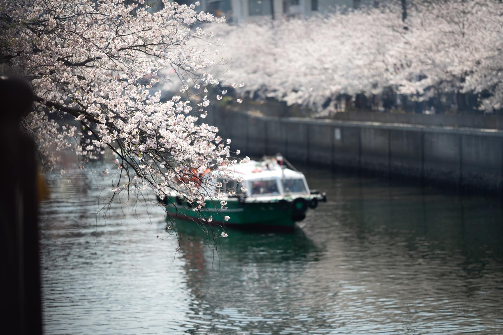 「花見をしながら大岡川を下る屋形船」の写真