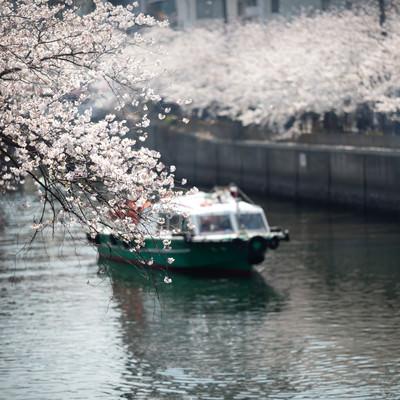 花見をしながら大岡川を下る屋形船の写真
