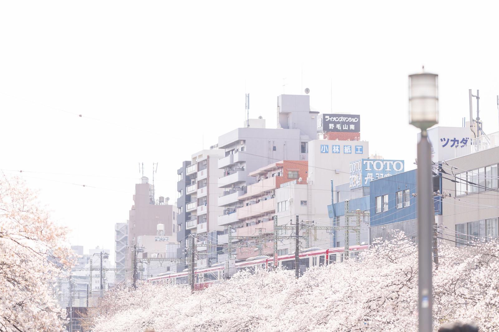 「桜並木沿いを走る京急電車と街並み」の写真
