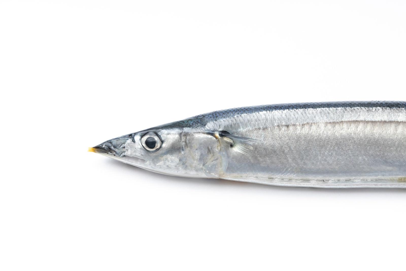 「秋刀魚のあたま」の写真