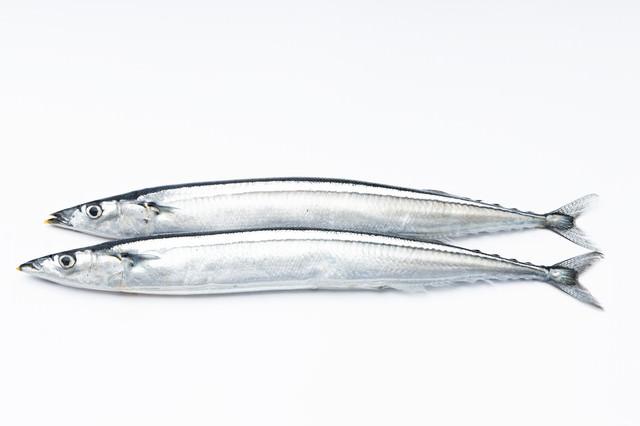 秋刀魚(さんま)二匹の写真