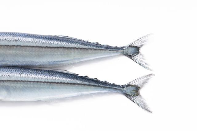 秋刀魚の尾びれの写真