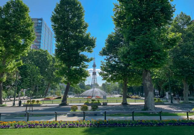 さっぽろテレビ塔が見える大通り公園の写真